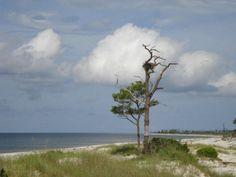 Osprey nest...Jason Taylor