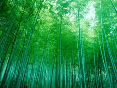 Bamboo Forest, Sagano, Kyoto, Japan Photographic Print at AllPosters.com