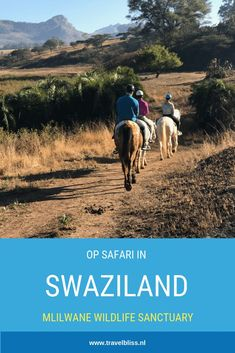 Swaziland is a kingdom in eastern South Africa. Many people who make a South Afr. Swaziland is a kingdom in eastern South Africa. Many people who make a South Africa tour, visit Swaziland. This is a perfect stop between St. South Africa Tours, Safari, Africa Destinations, Go Hiking, Travelling Tips, Africa Travel, Travel Inspiration, Wildlife, Backpacking