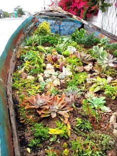 Oep ve Koep's succulent garden, Paternoster