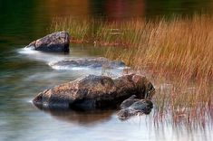 Rocks and grass in Eagle Lake, the largest fresh water lake in Acadia National Park in Maine.