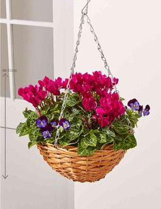 Wonderful Absolutely Free Hanging Baskets autumn Popular Hanging baskets are generally a great way to create shade as well as theatre into a warm wall structure and al. Autumn Garden Pots, Winter Garden, Winter Hanging Baskets, Flower Pots, Flowers, Winter Colors, Garden Spaces, Some Ideas, Raised Beds