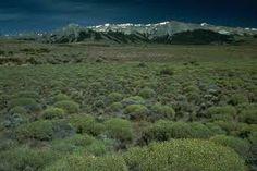 Bioma: Pradera y Estepa. Lugar al que corresponde: America del Norte. Problemas ambientales: fuertes vientos.