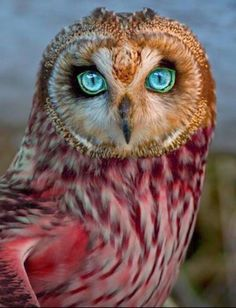 This has to be photo shopped, what an amazing coloring!
