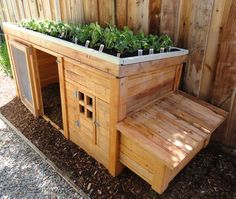 Backyard chicken coop with herb garden on the roof