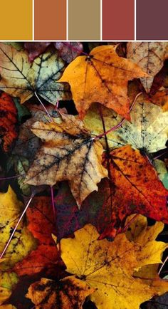 Fall Leaves. Designed By Lisa Perrone