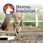 Ratsastuskentän lanaus hevosella - verkkokurssi Hevoskoulutus.fi