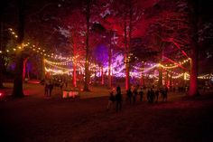 Saturday Outside Lands: Crowds of People, Fog, Food, and Music | 7x7