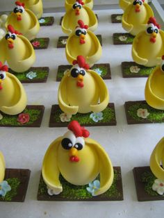 gallinelle su tavolette di cioccolato Pasqua Omar Busi