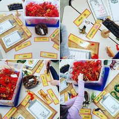 This year's Chinese New Year search and find bin! I made some Chinese zodiac animal cards for the students to match up with the hidden animals!🐓🏮NOW AVAILABLE on my tpt for anyone who is interested!😊 #kindergarten #kindergartener #kindergartenlife #teachersfollowteachers #teacher #ece #fdk #playbasedlearning #invitationtolearn #inquiry #earlychildhoodeducation #reggio #provocation #reggioinspired #iteachkinder #teachersofinstagram #frenchimmersion #tpt #teacherspayteachers #chinesenewyear