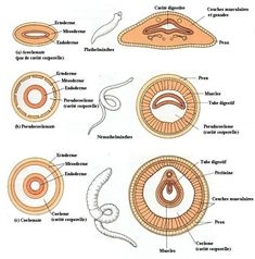Worm Images, Animal Classification, Gernal Knowledge, Earthworms, Organic Matter, Zoology, Teaching, Animal Kingdom, Insects