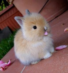 fluffy bunny *.*