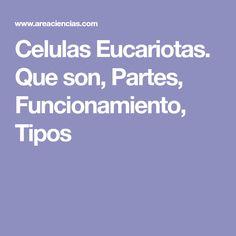 Celulas Eucariotas. Que son, Partes, Funcionamiento, Tipos