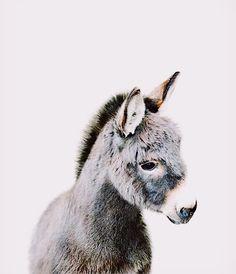 Baby Donkey Print Farm Animal Nursery The Crown Print .- Baby Donkey Print Farm Animal Nursery The Crown Prints - Cute Baby Animals, Animals And Pets, Funny Animals, Animals Kissing, Animal Memes, Farm Animal Nursery, Farm Nursery, Woodland Nursery, Puppy Nursery