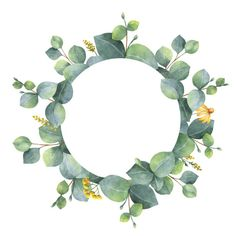 Watercolor hand painted round frame with silver dollar eucalyptus…. Watercolor wreath with silver dollar eucalyptus leaves and branches. Wreath Watercolor, Watercolor Flowers, Watercolor Art, Flower Background Wallpaper, Flower Backgrounds, Eucalyptus Leaves, Arte Floral, Flower Market, Flower Frame