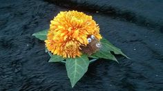 Cute Hedgehog made from chrysanthemums and teasels