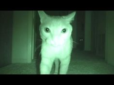 He Wanted To See What His Cats Were Doing At Night, So He Installed A Hidden Camera, LOL | The Meow Post
