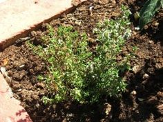 Free stuff you can make from rabbit poop: The reason you can use rabbit manure in the garden is that rabbits are vegetarians, so they don't eat meat that might carry diseases to humans as in dog or cat waste.