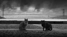 Beautiful Black Cats ♥ istanbul`s cats