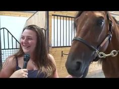 Harper Blue Chip- 2014 Hambletonian Contender