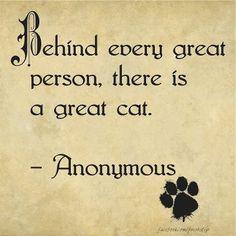 a great cat