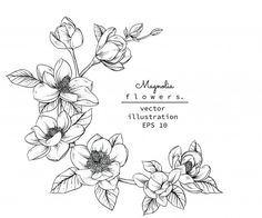 Find Sketch Floral Botany Collection Magnolia Flower stock images in HD and millions of other royalty-free stock photos, illustrations and vectors in the Shutterstock collection. Magnolia Wreath, Magnolia Flower, Flower Sketches, Flower Drawings, Tattoo Fleur, Flower Outline, Wreath Drawing, Hand Drawn Flowers, Vector Flowers