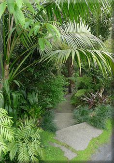 Titirangi garden bush path