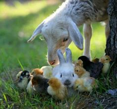 Chicks, bunnies, sheep