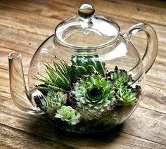 terrario em bule de vidro suculentas