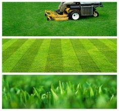 Lawn mowing in fall
