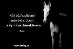 Equestrian Quotes, Horse Love, Be Yourself Quotes, Animals And Pets, Quotations, Texts, Inspirational Quotes, Horses, Dressage