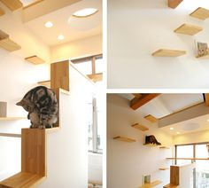 The Ultimate Cat Friendly Homes!! For all the Cool Cat People out there!! ;)