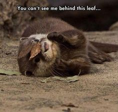 Otter Hiding Behind a Leaf