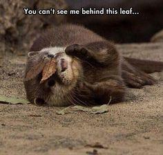 Otter Hiding Behind a Leaf
