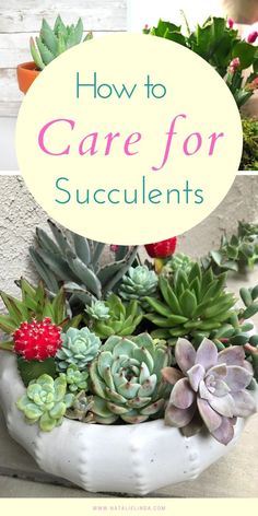 Learn how to properly care for succulents so you can enjoy them in your home and yard! Succulents are drought-tolerant plants that are easy to care for, making them perfect for gardening beginners! All About Plants, Fall Containers, Herb Garden Design, Inside Plants, Plants Are Friends, Succulent Care, Drought Tolerant Plants, Garden Seeds, Succulents Garden