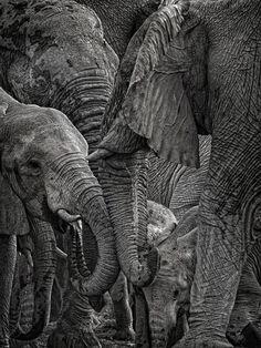 Elephants in melee by Mathilde Guillemot on 500px