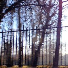 41/365 Fence / Valla