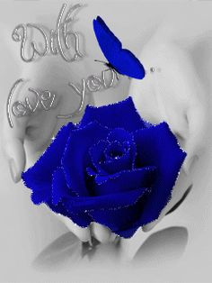 Flowers Gif, Beautiful Rose Flowers, Beautiful Gif, Love Rose, Beautiful Butterflies, Beautiful Flowers, Beautiful Family, Blue Roses Wallpaper, Flower Wallpaper