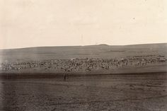 The 2nd Battalion The Cameronians (Scottish Rifles) setting up camp at Frere on 13th December 1899.