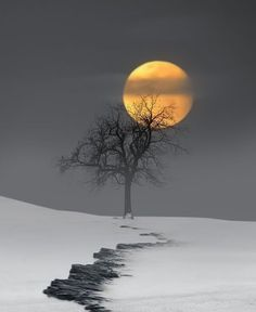 99 Charming Moonlight Photography Ideas and Tips Landscape Photography, Nature Photography, Travel Photography, Photography Lighting, Photography Hacks, Photography Courses, Photography Magazine, Iphone Photography, Painting Art