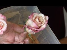 How to Preserve Flowers with Borax - YouTube