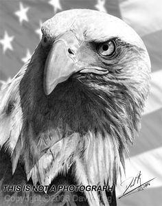 American Eagle and Flag by superchickenn123.deviantart.com on @deviantART