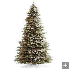 Novia Scotia Hemlock tree for Christmas.