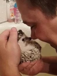 Hedgies aren't always this sweet but when they are it feels even more rewarding