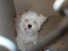 ADOPTABLE PETS AT LORAIN COUNTY DOG KENNEL Elyria, OHIO.... Pictured: BUTTERCUP (sweetheart)  https://www.petfinder.com/pet-search?animal=&breed=&age=&size=&specialNeeds=&declawedPets=&children=&status=&id=&internal=&contact=&name=&shelter_id=OH254&sort=&preview=1
