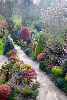 Upper garden path in mid spring sunshine, Four Seasons Garden, England
