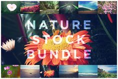 Check out Nature Stock Bundle by Sseej Design Co. on Creative Market