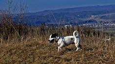 Das erste Frühlingswochenende, ... gefällt nicht nur den Menschen. Auch ihre vierbeinigen Freunde macht es viel Spaß, in der wärmenden Sonne herum zu toben. Auch auf dem Nackberg zwischen Hilbringen und Silwingen. :-) Cow, Animals, Sun, Friends, People, Pictures, Animales, Animaux, Cattle