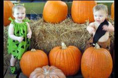 Precious Pumpkins!