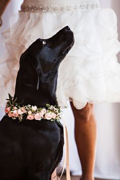 This black lab is all dressed up for the big day | Mint, Gold & Pink Wedding Inspiration